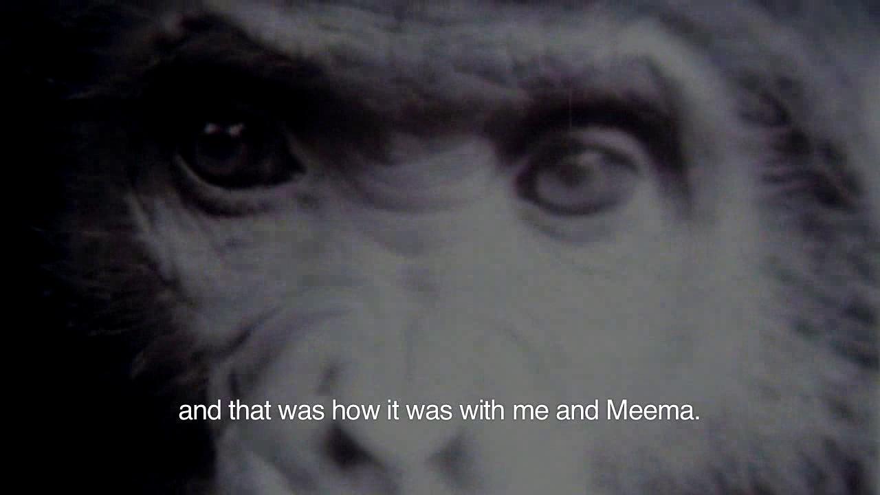 Lesser Apes - Meema-film